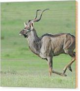 Kudu Bull Running Across Open Veld Wood Print