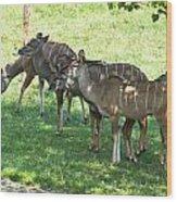 Kudu Antelope In A Straight Line Wood Print