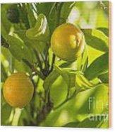 Kumquats Wood Print
