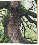 Kyoto Temple Tree Wood Print by Carol Groenen