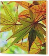 Kyoto's Beauty Of Autumn Wood Print