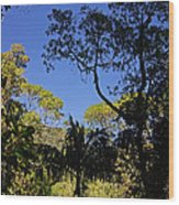 jungle in La Amistad National Park Panama 1 Wood Print