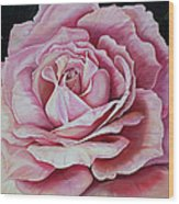 La Bella Rosa Wood Print