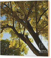 La Boca Ranch Cottonwood Wood Print