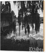 La Chua Trail Wood Print