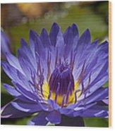 La Fleur De Lotus - Star Of Zanzibar Tropical Water Lily Wood Print