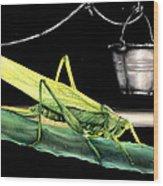 La Locusta E Il Secchio Wood Print