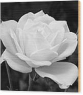 La Rosa In Black And White Wood Print