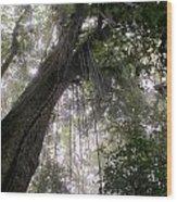 La Tigra Rainforest Canopy Wood Print