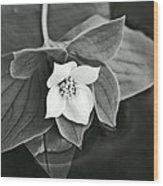 La Vie En Noir Et Blanc Wood Print