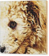 Labradoodle Dog Art - Sharon Cummings Wood Print