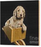 Labradoodle Puppy In A Wheelbarrow Wood Print