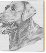 Labrador Dog Drawing Wood Print by Catherine Roberts
