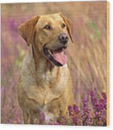 Labrador Dog Wood Print