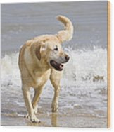 Labrador Dog Playing On Beach Wood Print