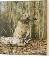 Labrador Jumping With Stick Wood Print