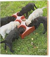 Labrador Puppies Eating Wood Print
