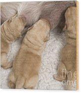 Labrador Puppies Suckling Wood Print