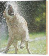Labrador Retriever And Hose Wood Print