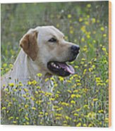 Labrador Retriever Dog Wood Print