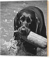 Labrador Retriever Wood Print by Emily Bemelmans