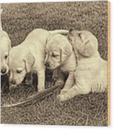 Labrador Retriever Puppies And Feather Vintage Wood Print