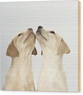 Labrador Retriever Puppies Wood Print