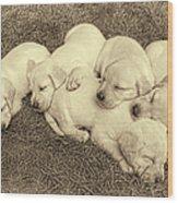 Labrador Retriever Puppies Nap Time Vintage Wood Print by Jennie Marie Schell