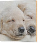 Labrador Retriever Puppies Sleeping  Wood Print