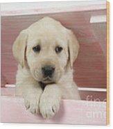 Labrador Retriever Puppy Wood Print