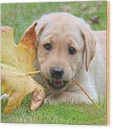 Labrador Retriever Puppy With Autumn Leaf Wood Print