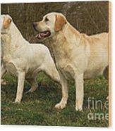Labradors Wood Print