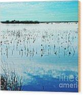 Lacassine Nwr Blue Pool Wood Print