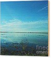 Lacassine Nwr Pool Blue And Green Wood Print