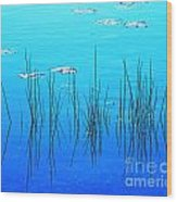 Lacassine Pool Reeds Wood Print