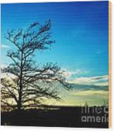 Lacassine Tree Wood Print
