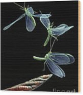 Lacewing Taking Off Wood Print by Stephen Dalton