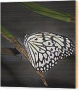 Lacey Wood Print