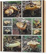 Lactarius Torminosus - Yellow Mushrooms Wood Print