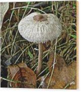 Lacy Parasol Mushroom Wood Print