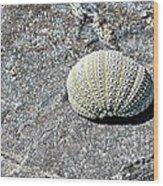 Lacy Shell On A Beachrock Wood Print