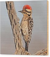 Ladder-backed Woodpecker Wood Print