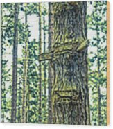 Ladder Tree Wood Print