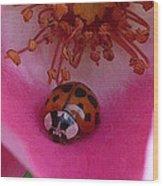 Ladies Rose Wood Print