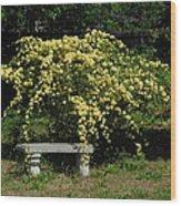 Lady Banksia Rose Wood Print
