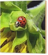 Ladybug And Sunflower Wood Print