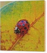 Lady Bug 3 Wood Print