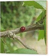 Lady Bug Branch Wood Print