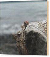 Lady Bug Lake Wood Print
