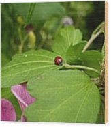 Lady Bug Wood Print